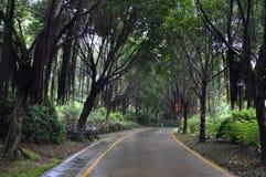 Road. Park a wet asphalt road over the rain Royalty Free Stock Image