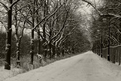 The road in the park on a winter evening. Royalty Free Stock Image