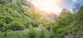 Road passing through a beautiful gorge among the mountains covered with green vegetation and trees. Panoramic image Royalty Free Stock Images