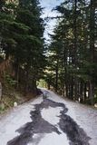 Road passing through a forest, Manali, Himachal Pra Royalty Free Stock Image
