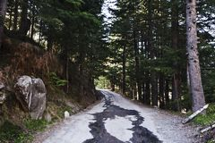 Road passing through a forest, Manali, Himachal Pra Royalty Free Stock Photography