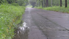 Rainy forest road, India. A road passing through green forest, under rain, monsoon stock footage stock video