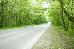 Road Passing In Green Forest Stock Photo