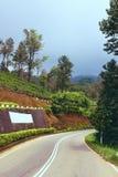 Road passing by tea plantation in Sri Lanka Royalty Free Stock Photo