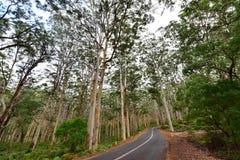 Free Road Passing Through Boranup Karri Forest Royalty Free Stock Photo - 56411065