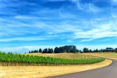 Road Passing through Vineyard Stock Image
