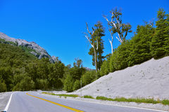 Road in the  Patagonia. Roadside covered with white volcanic ash remaining after the eruption Pueue. Road in the mountains of Patagonia Stock Photos