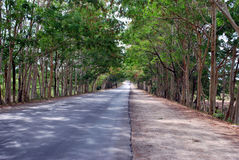 A road and a path in Cuba. Stock Images