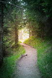 Road path goes to sunlight. At the end of the forest tunnel Royalty Free Stock Photos