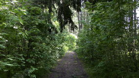 The road path with green trees in the forest. Walkway Lane Path With Green Trees in Forest. Beautiful Alley, road In Park. Way Through Summer Forest stock footage