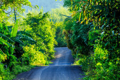 Road. The path to the mountains royalty free stock photo