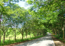Road path of trees royalty free stock photo