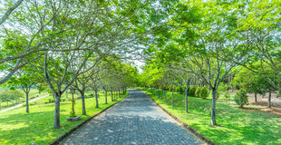 The road and path trees Royalty Free Stock Image