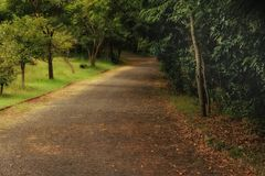 Road, Path, Vegetation, Nature Reserve Royalty Free Stock Photos