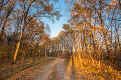 Road Path Walkway Through Autumn Forest. Sunset Sunrise Royalty Free Stock Image