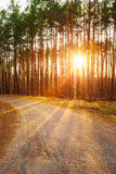 Road, path, walkway through forest. Sunset Sunrise Royalty Free Stock Photo