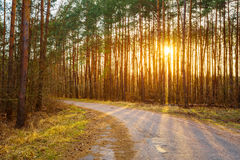 Road, path, walkway through forest. Sunset Sunrise Stock Photos