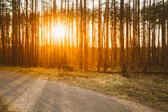Road, path, walkway through forest. Sunset Sunrise Stock Image
