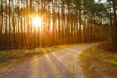 Road, Path, Walkway Through Forest. Sunset Sunrise In Autumn Forest Stock Photo
