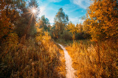 Road, Path, Way, Lane, Pathway In Autumn Forest. Sun Shining Through Canopy Of Trees Woods. Road, Path, Way, Lane, Pathway In Beautiful Autumn Forest. Sun Royalty Free Stock Image
