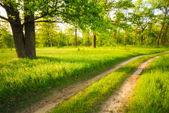 Road, path, way, lane in summer green forest Stock Photography