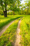 Road, Path, Way, Lane In Summer Green Forest royalty free stock photography