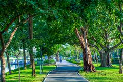 Road pathway Jogging track in the public park under big tree.  royalty free stock image