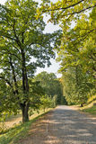 Road paved with cobbles leading to Schonborn Castle. Chynadiyovo, Ukraine. Stock Photo