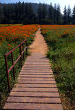 The road. Perspective road on the beautiful flower farm Royalty Free Stock Photo