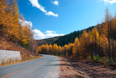 Road. This photo was taken in a fall noon, in northeast China Stock Image