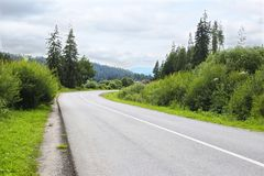 Road in a picturesque forest area royalty free stock photo