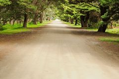 Road in pine forest Royalty Free Stock Images