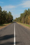 Road through the pine forest. Autumn scene with forest road royalty free stock photo