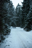 ROAD IN PINE FOREST COVERED BY SNOW Royalty Free Stock Images
