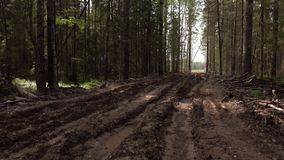 Road in a pine forest. Dirt roads stock video footage