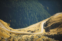 Road at Pine Forest Stock Images