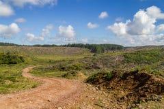 Road and Pine Forest. Road passing through Pine Forest in Cambara do Sul, Rio Grande do Sul, Brazil stock photo