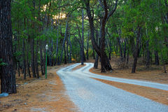 Road in the pine forest Royalty Free Stock Photography