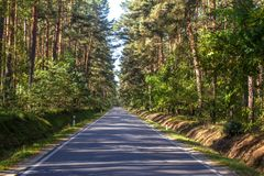 Road in the pine forest.  stock photos