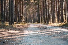 Road in the pine forest. Near the sea in Estonia royalty free stock photo