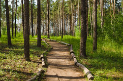 Road into pine forest Stock Photography