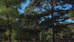 Road through pine-tree forest in Tenerife stock video
