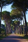 Road with pine trees. A road with pine trees in a sunny day. This lonely road is near Pisa, Italy stock photo