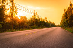 The road between Pine trees at sunset. Royalty Free Stock Image