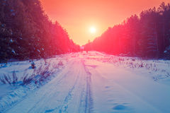 Road in pine winter snowy forest Royalty Free Stock Images