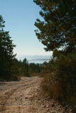Road in pine wood on bay coast Royalty Free Stock Image