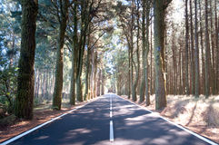 Road through the pine woods, Spain Stock Images