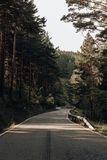 Road between pines in the mountains stock photos