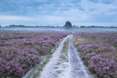 Road between pink flowering meadows with heather Stock Photo