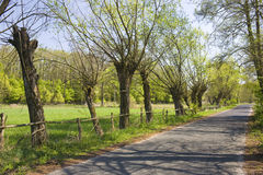 Road in poland. In europe in spring Royalty Free Stock Images